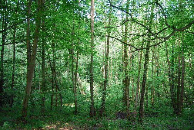 Sproud's Wood