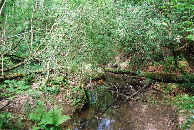 Stream in Sproud's Wood