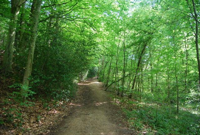 Tunbridge Wells Circular Walk in Sproud's Wood