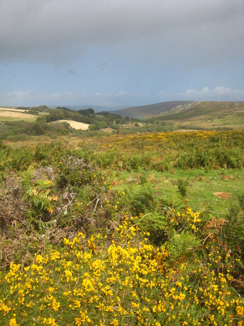 Moorland at Harefoot Cross