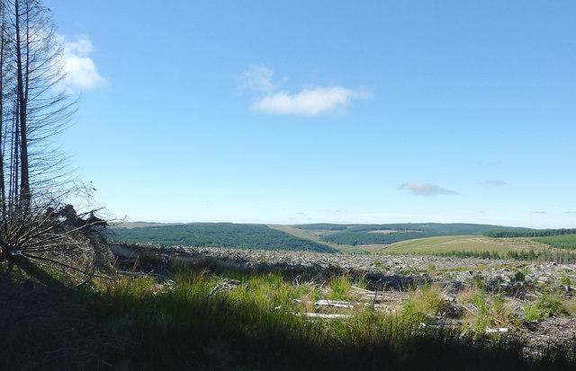 Clear felled forest on Pen y Cnwc, Powys