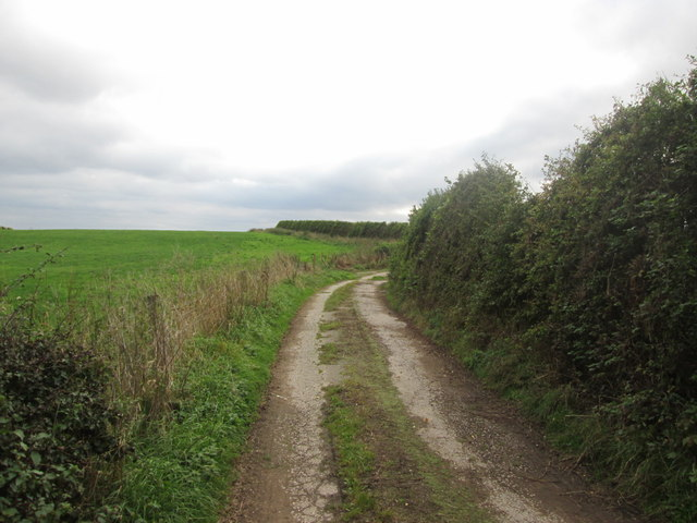 Track south from Hollins Wood