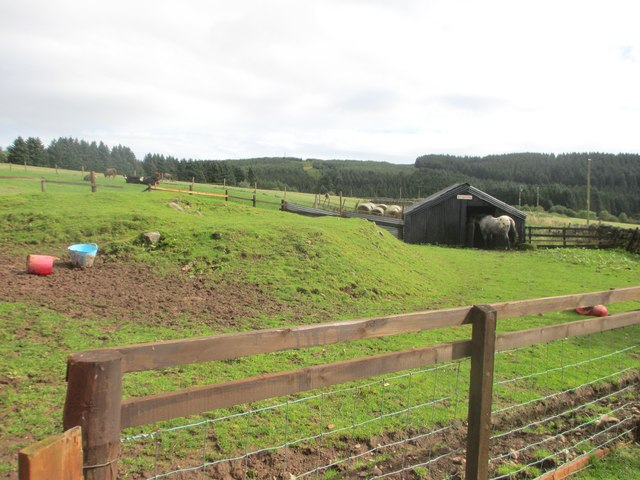 Fields at Ettrick Stables