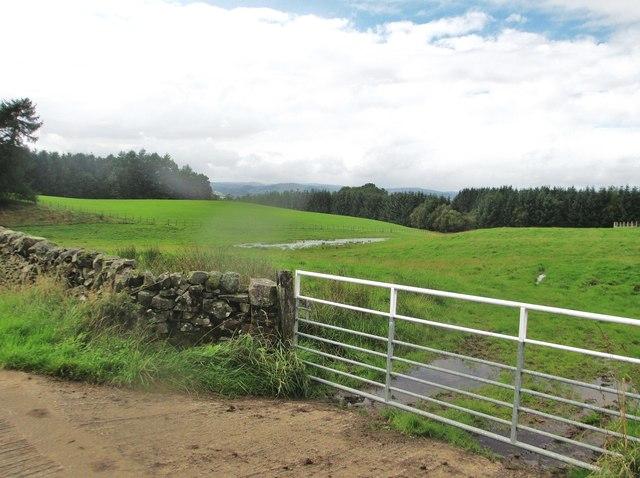 Looking west over Herd's Knowe