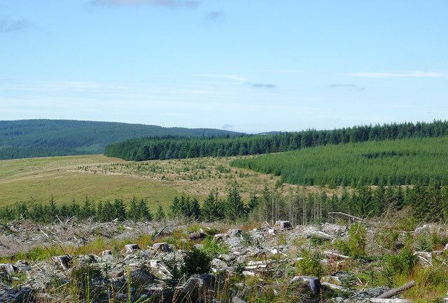 Clear fell on Pen y Cnwc, Powys