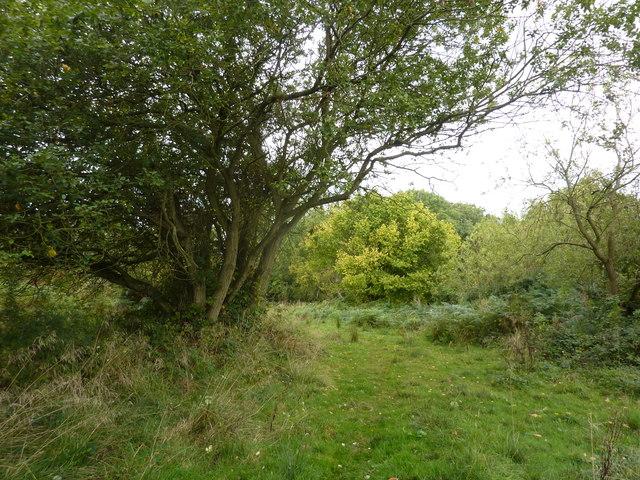 Mansey Common