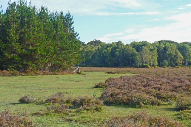 Poundhill Heath, New Forest