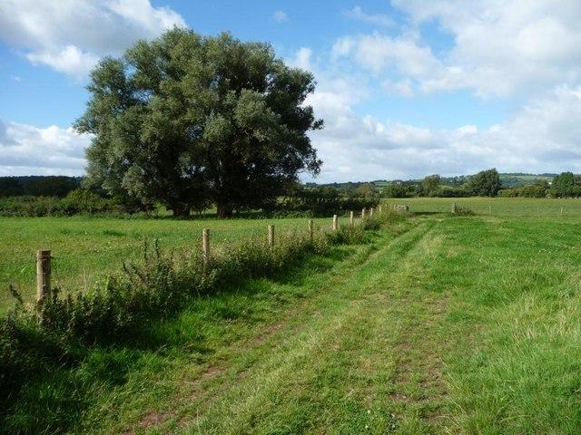 Field boundary, Usk valley