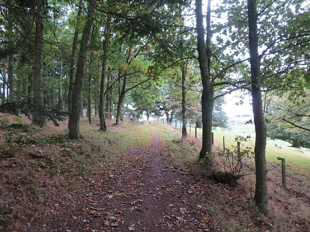 Woodland path, Thirlestane