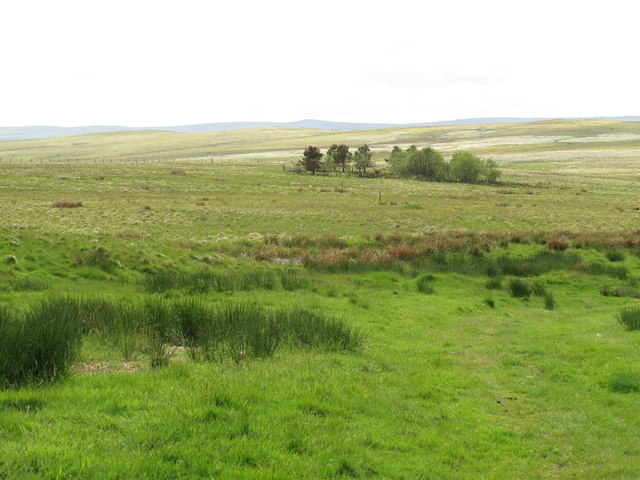 Moorland and small plantation between Heely Dod and Black Stitchel