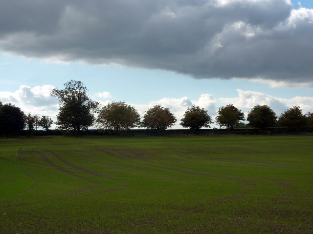 Patterns in a field