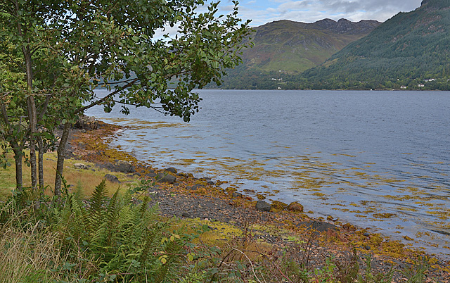 Loch Duich shoreline