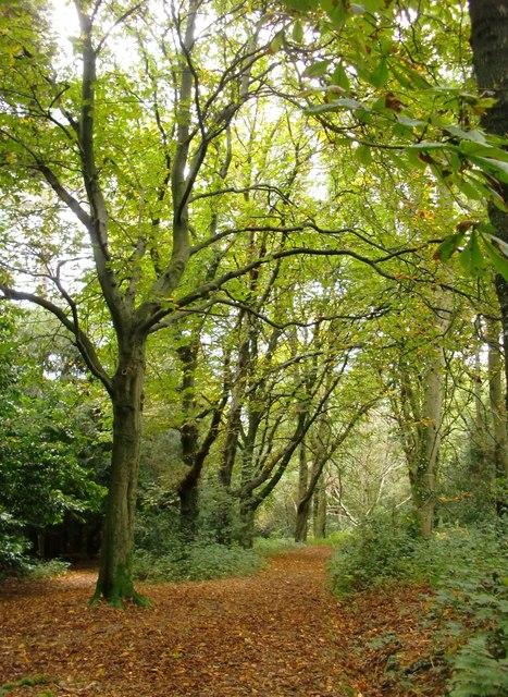 Woodland, Holmwood Common