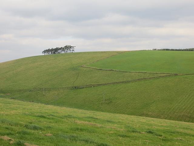 Hillside, Birniehill