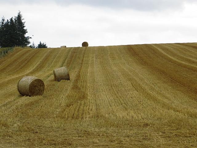 Stubble near Newhill
