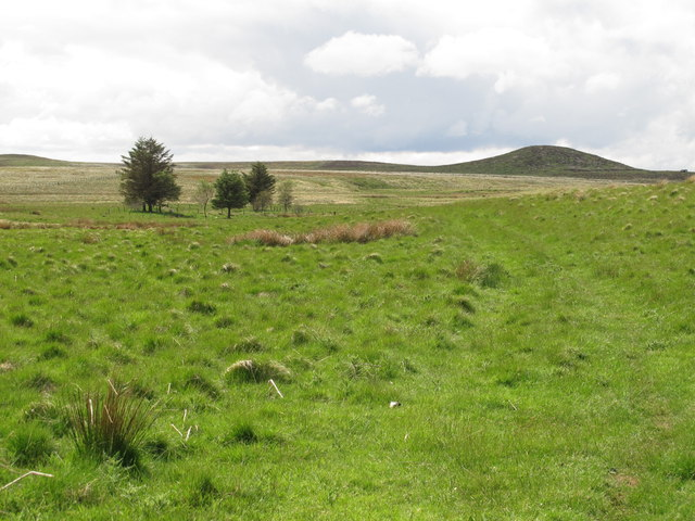 Copse and moorland east of Black Stitchel