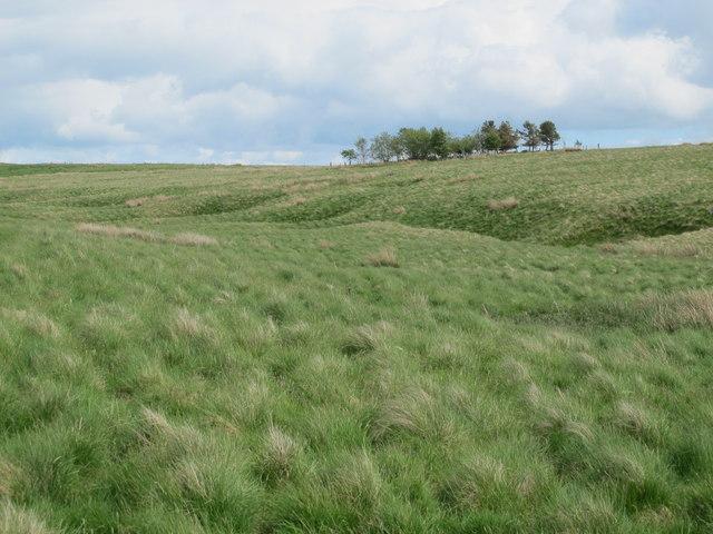 Moorland west of Heely Dod
