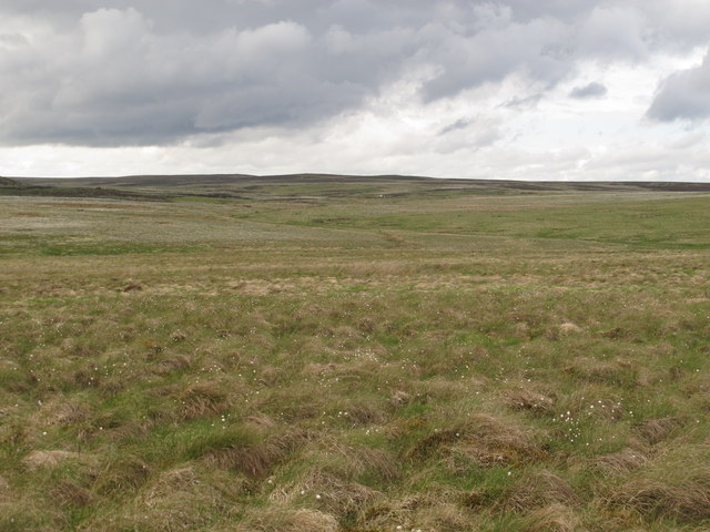 Bog cotton on the moorland between Black Stitchel and Heely Dod