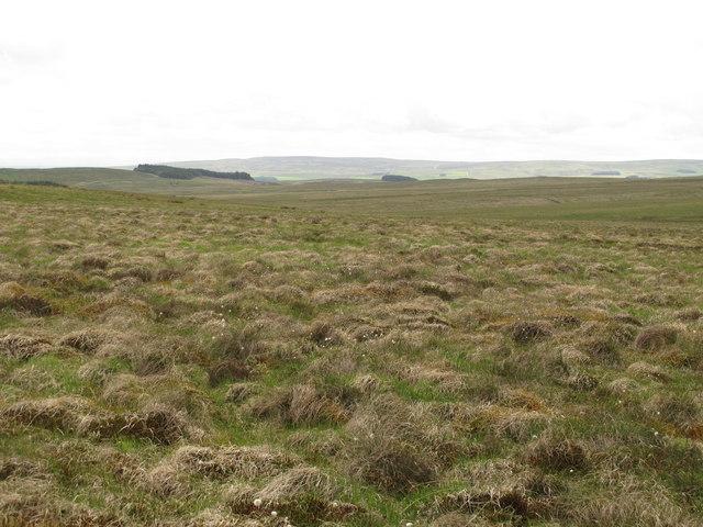 Moorland southwest of Black Hill