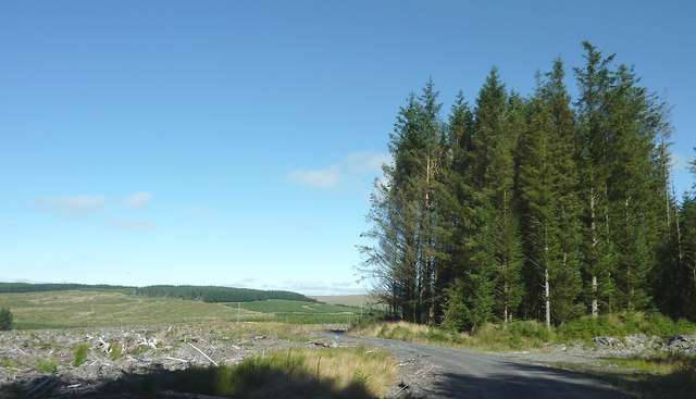 Coniferous trees on Pen y Cnwc, Powys