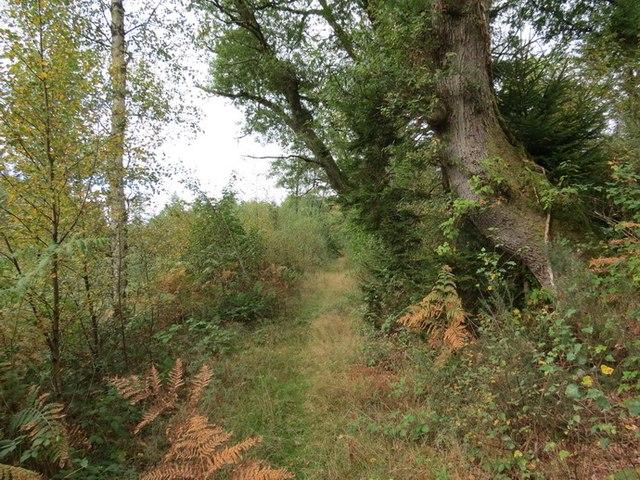 Llwybr Ffinnant Path