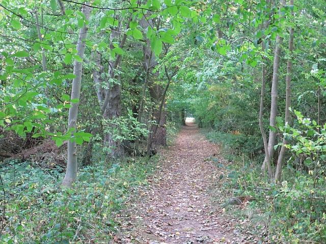 Path, Letham
