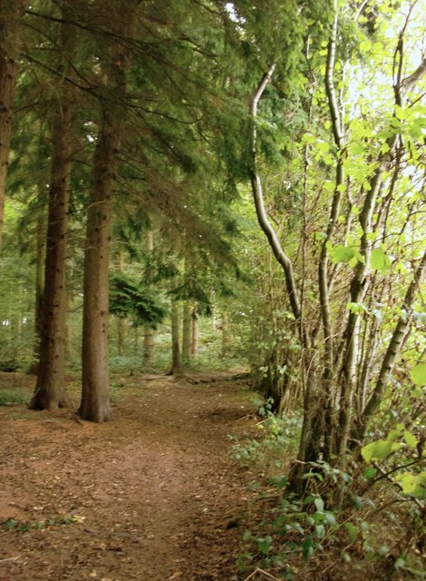 Path at the margin of High Ridge Wood