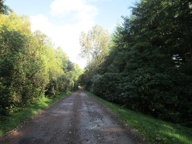 Track in Carmichael Estate near West Mains