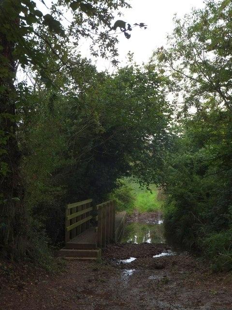 Trees hanging over the Littleham Brook