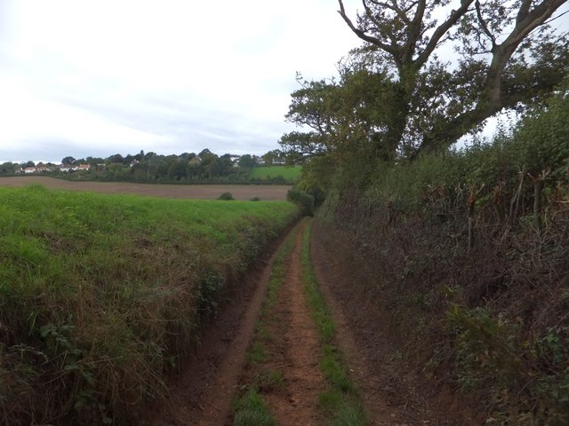 Randall's Green track in the valley of Littleham Brook (1)