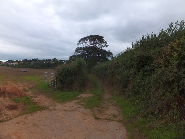 Randall's Green track in the valley of Littleham Brook (2)