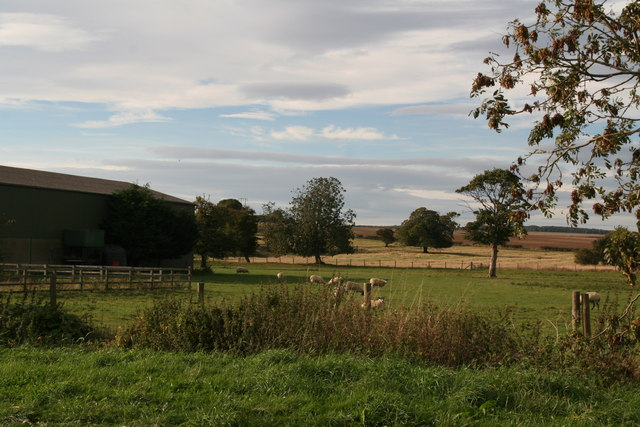 Paddock next to East End Farm, Butterwick