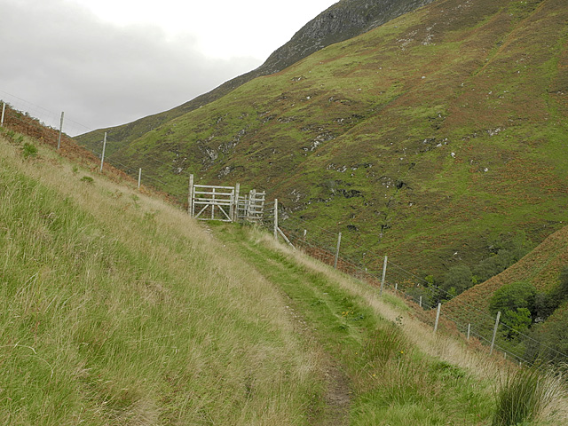 Deer fence and gate