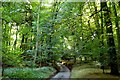 SU7894 : Bigmore Lane through Dell's Wood by Steve Daniels