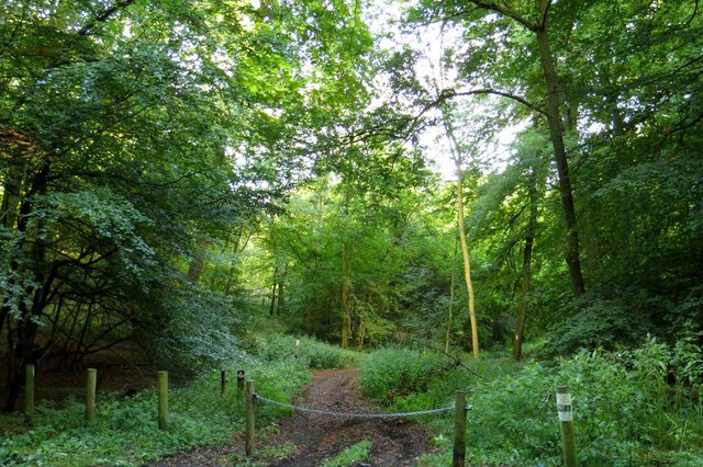 Bridleway through Dell's Wood