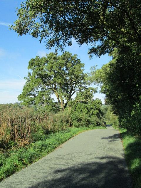 Country lane near Dunwood