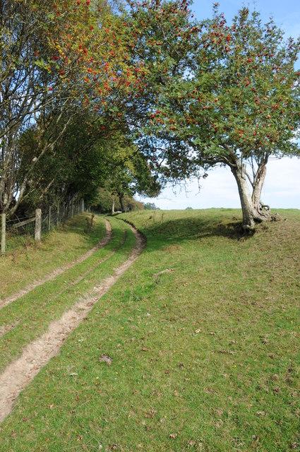Rowan trees beside a byway