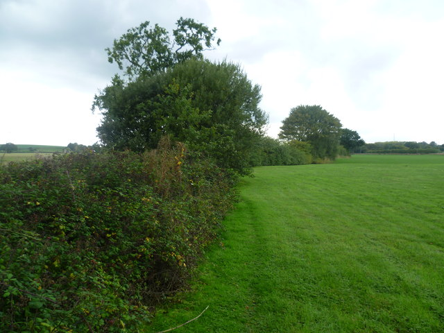 Hedgerow near Lower Park Farm