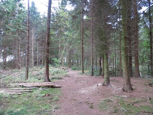 Perimeter path, Butterdean Wood