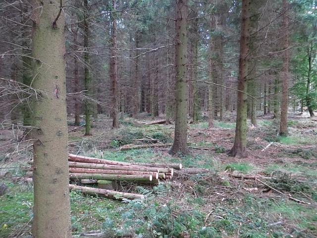 Thinning, Butterdean Wood