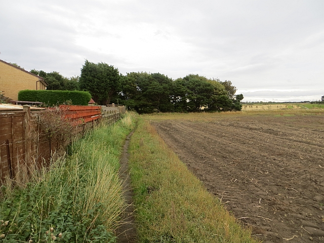 Field edge, Port Seton