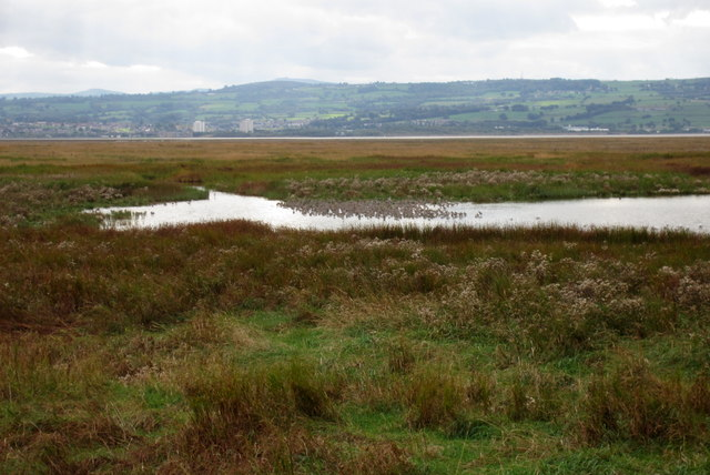 Wildfowl on the Parkgate marshes