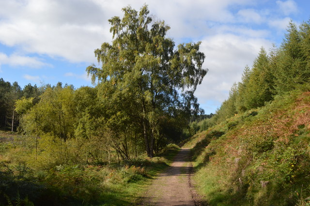 Old Military Path on Cannock Chase