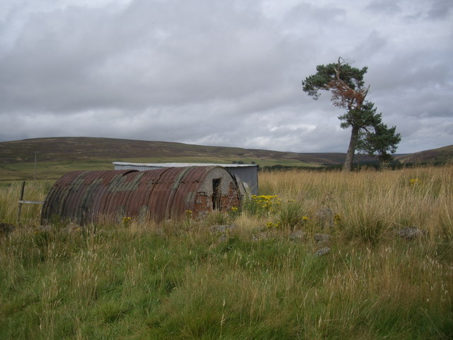 Tin, tin and lone pine