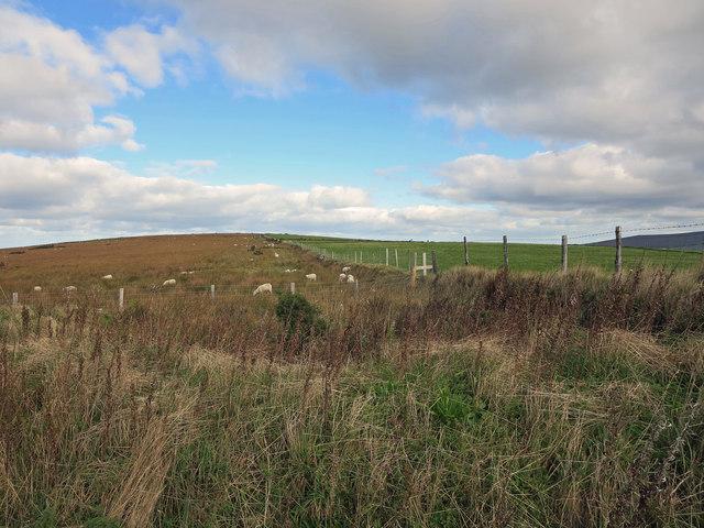 Field bank near Crymych