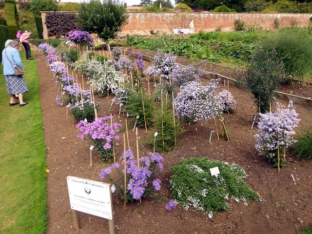 National Plant Collection of Asters, Upton House