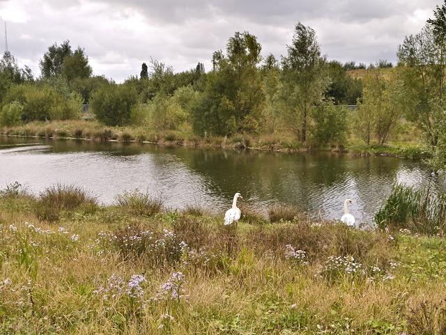 Small Lake at Ashton Moss