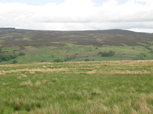 Moorland above Loaning Burn (2)