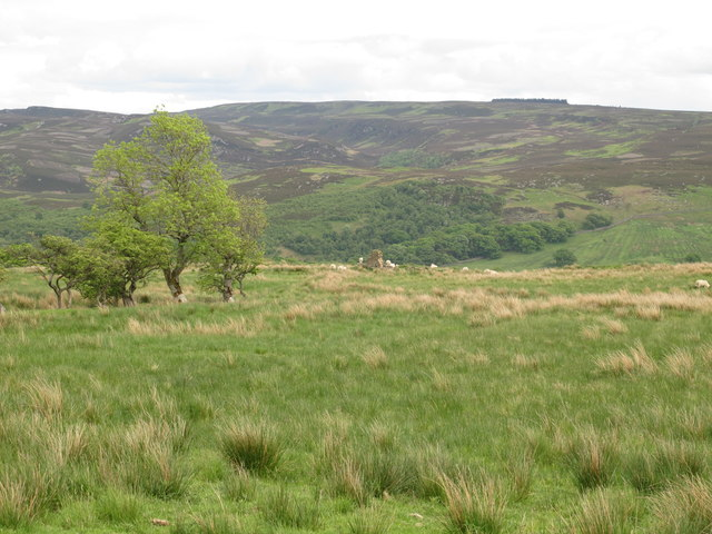 Moorland east of Lemon Corner