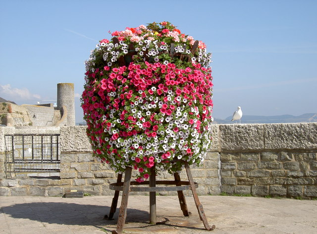 A ball of flowers